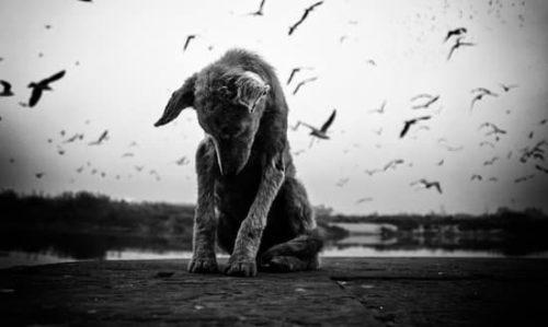 Een hond met een Trauma is niet vrij om te leven - hij is gevangen in zijn onzichtbare gevangenis van vrees.