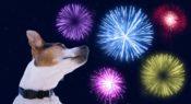 Hond blij tijdens oud en nieuw
